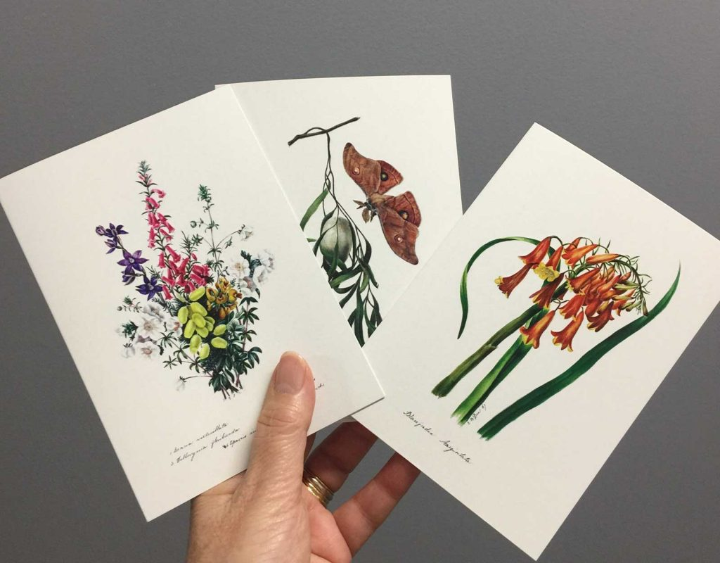 Eliza Blyth Florist Greeting Cards in Liverpool NSW