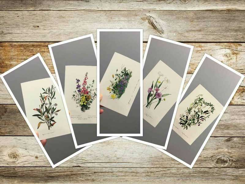 Greeting cards available from Gowans & Son Chipping Norton. Floral designs by colonial artist Eliza Blyth.
