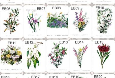 Floral designs by colonial artist Eliza Blyth. Greeting cards available from Gowans & Son Chipping Norton